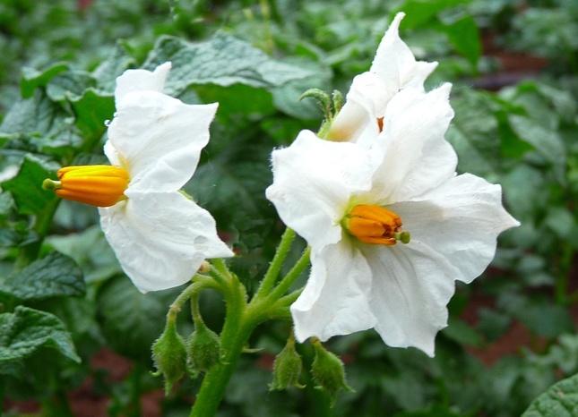 Kvetinka 17