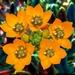 Kvetinka 32