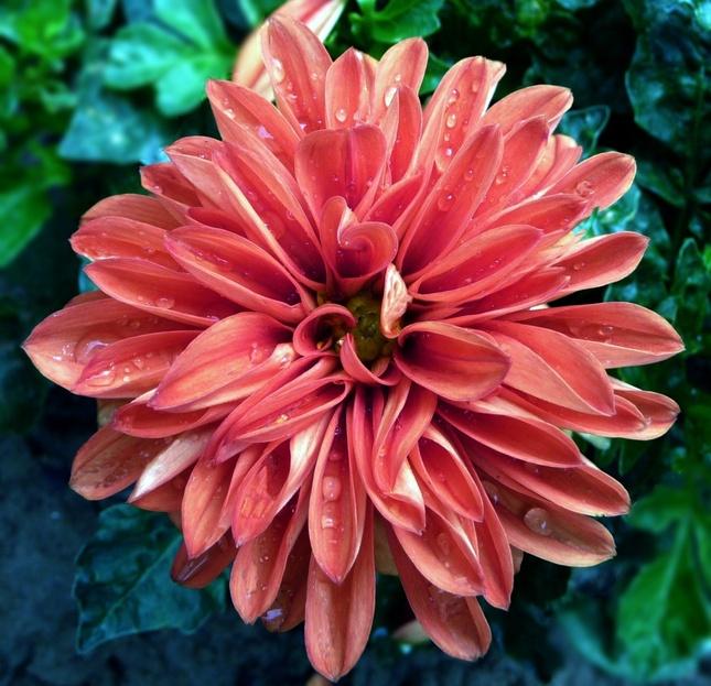 Kvetinka 30