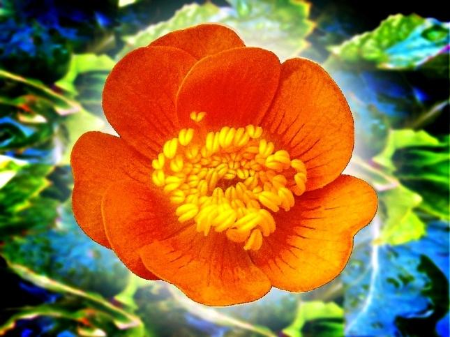 Kvetinka  71