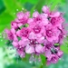 Kvetinka 8