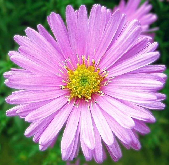 Kvetinka  86