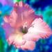Kvetinka 51