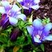 Kvetinka  97