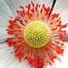 Kvetinka 23