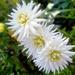 Kvetinka  74