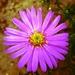 Jesenný kvet