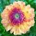 Kvetinka  61