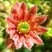 Kvetinka 21