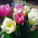 Kvetinka 310