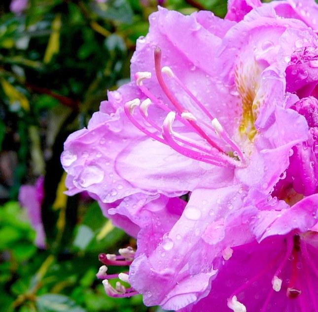 Kvetinka 180