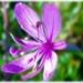 Kvetinka  64