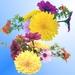 Kvetinky 116