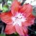 Kvetinka  128