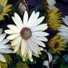 Kvetinka 167