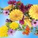 Kvetinky  117