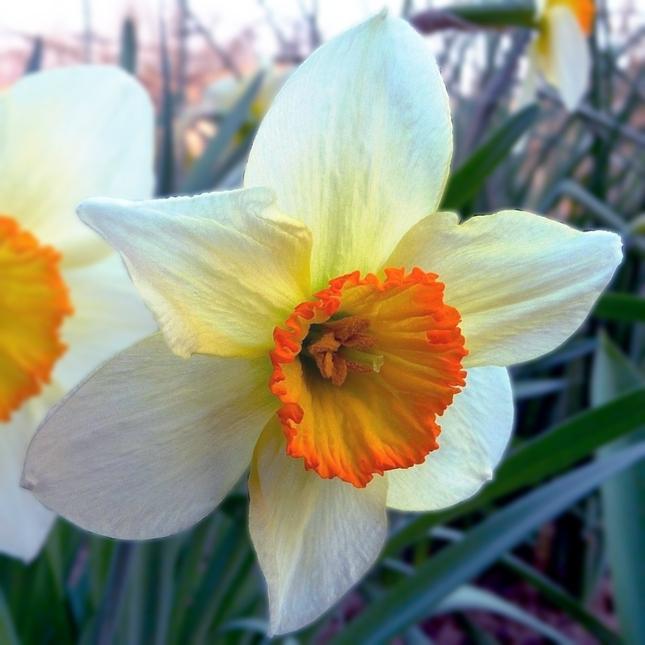 Kvetinka  126