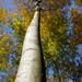 jeseň v hore_2