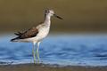 Tropické leto a honba za brodivými vtákmi