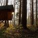 Čarovný les ...