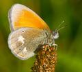 Butterffly,,,