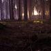 Lesík.....druhá zo série