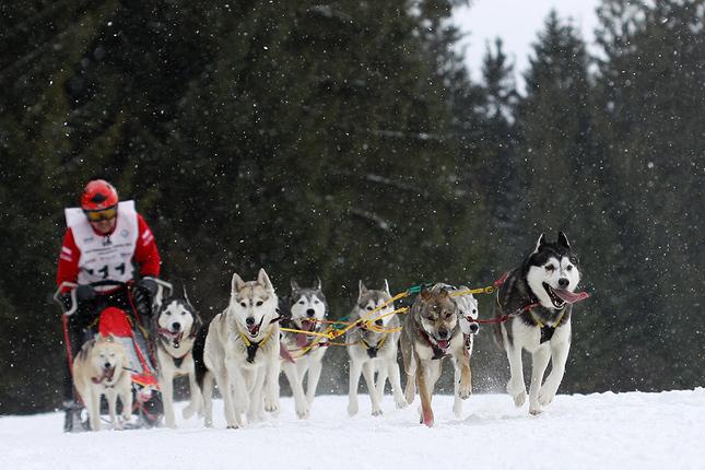 Psie záprahy - Zuberec 2012