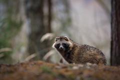 Tajomný tvor našich lesov