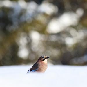 V zajatí zimy