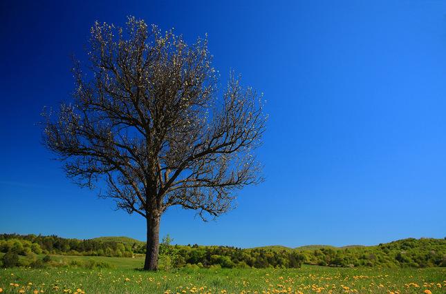 jadna luka, jeden strom... I