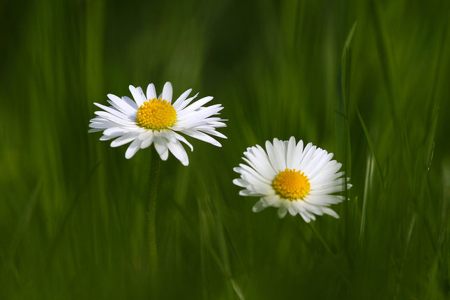 Kvetinkova...