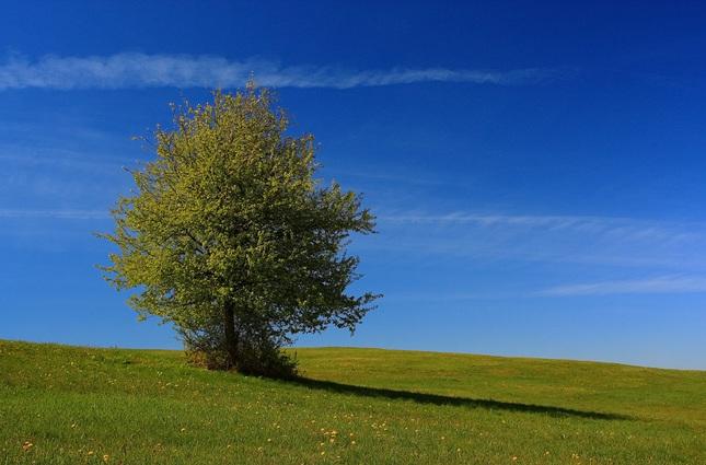 jedna luka, jeden strom... II.