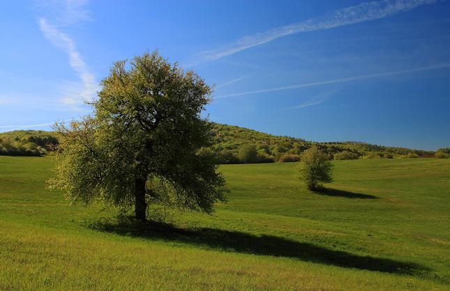 jedna luka, dva stromy... III.