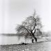 Film 120mm - Trees