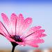 Kvetná nedeľa