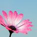 Kvetná nedeľa 2