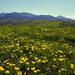 Jar v Trnovom