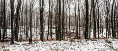 Snehové impresie I