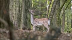Danielča v lese