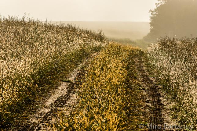 Cesta rannou hmlou