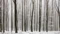 Línie lesa