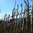 záhradné ploty