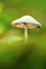 tajemná houbička
