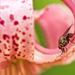 Mucha v ľalii