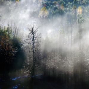 Lesný sen