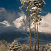 3 tatranské stromy