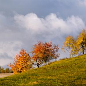 Jesenné farbenie