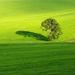 Strom a jeho tieň