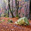 V lese pri Šútove