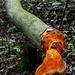 Zab i bobra, zachrániš strom